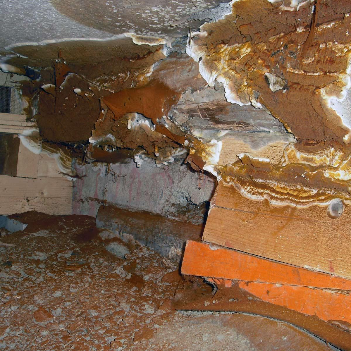 Neljä vuotta sitten remontoidun kohteen alapohjassa on lattiasienikasvustoa.