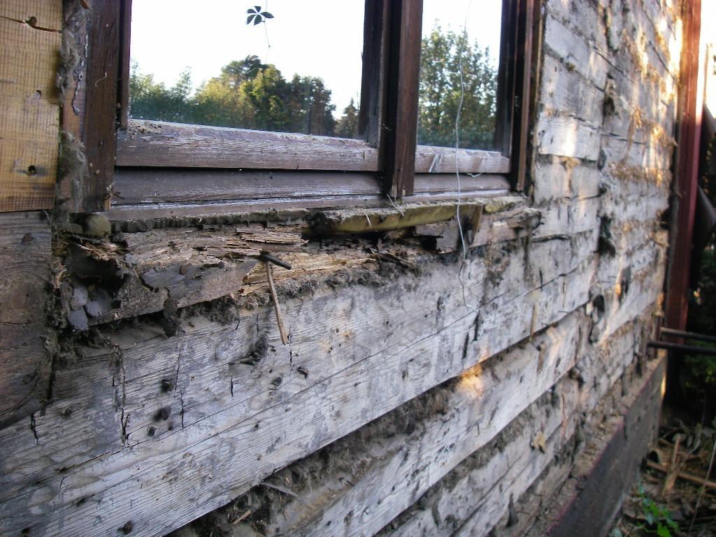 Ikkunan vesipellin vuodon aiheuttama lahovaurio hirsissä.