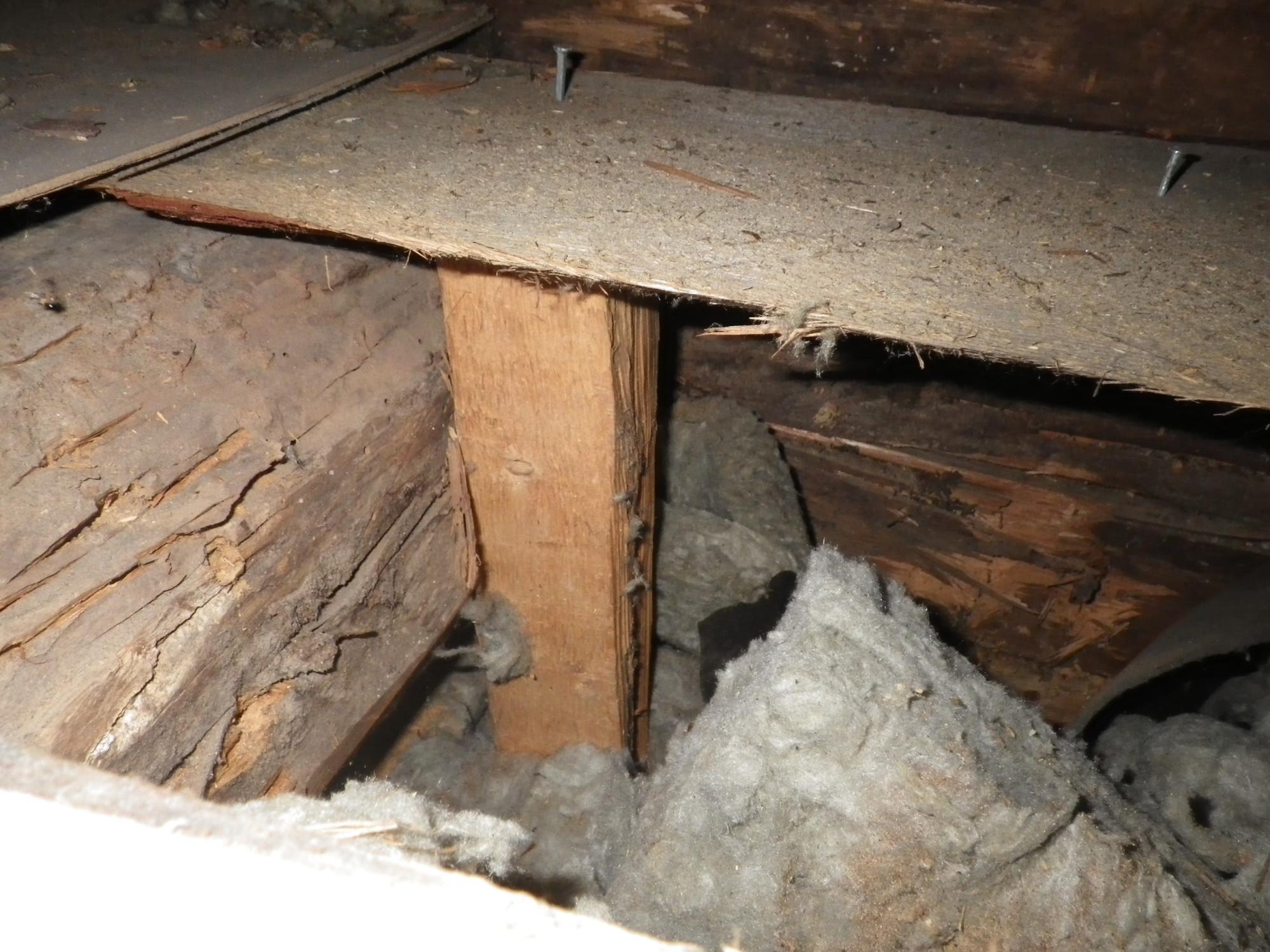 Hirren ja palkin lahovauriota yläpohjan avaamisen jälkeen.
